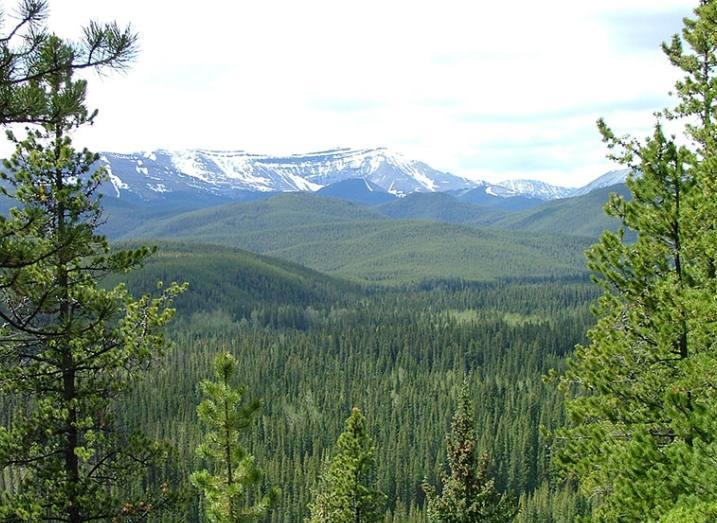 borealforest