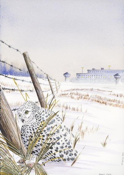 Snowy Owl and Field - print quality